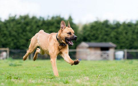 狂犬病的表现 如何预防狂犬病 狂犬病的预防方法