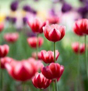 花粉过敏诱发老太心脏病 这么做能预防