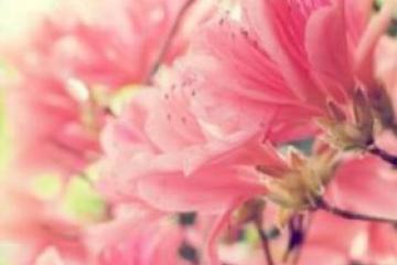 花粉过敏诱发老太心脏病 怎么避免过敏