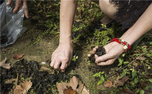 怎样清洗地皮菜 怎么做地皮菜 地皮菜的食用功效