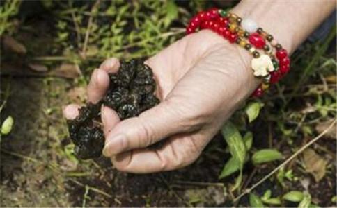 剁椒怎么焖地皮菜 剁椒焖地皮菜 剁椒地皮菜的营养