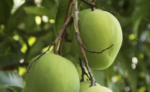 吃芒果过敏怎么办 芒果过敏如何预防 芒果过敏怎么治疗