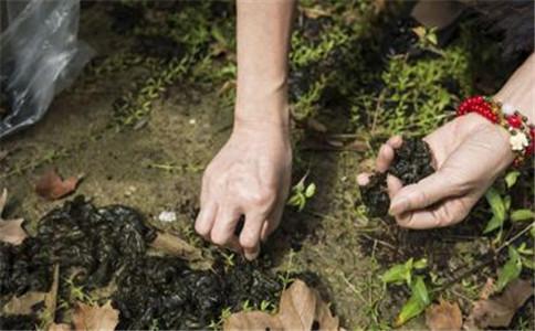 什么是地皮菜 地皮菜有什么营养 地皮菜有什么功效