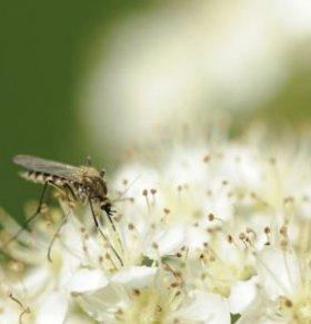 夏季如何防蚊虫叮咬 孕妇怎样驱蚊最有效 孕妇如何防蚊