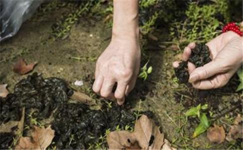 吃地皮菜的好处 地皮菜怎么做 什么是地皮菜
