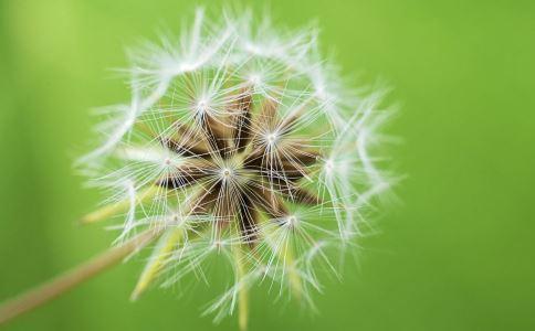 便秘怎么办 麦冬治便秘吗 治便秘的中草药有哪些