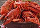 德国小龙虾泛滥求吃 小龙虾的做法