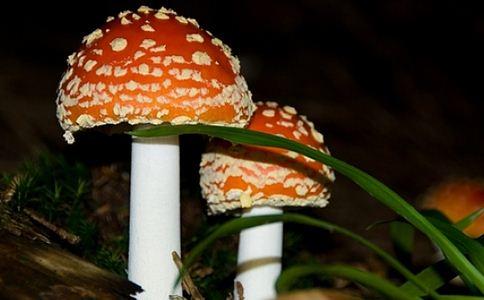 夫妻吃野蘑菇中毒 蘑菇中毒如何处理 如何预防蘑菇中毒