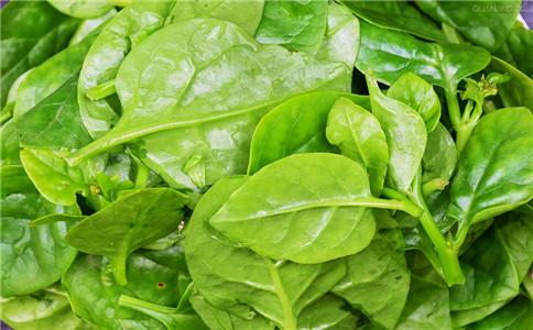 吃哪些野菜保健 有营养的野菜 哪些野菜可以吃