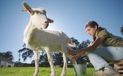 女性喝羊奶有什么好处 美容瘦身促进睡眠