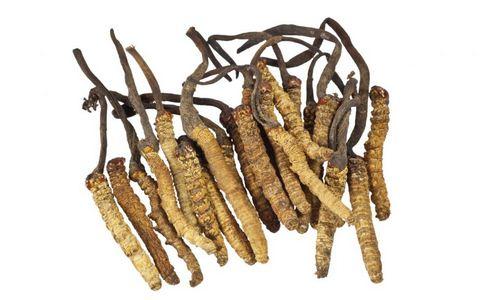 冬虫夏草不属保健品 冬虫夏草的功效 冬虫夏草有哪些功效