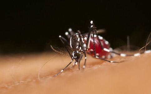 夏季驱蚊方法 夏季驱蚊方法用什么 夏季驱蚊用什么方法
