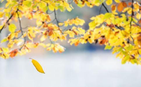 冬季注意饮食 秋冬季饮食注意事项 冬季应注意饮食清淡