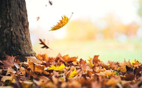 秋冬进补吃什么好 入秋吃什么食物好 秋季养生吃什么