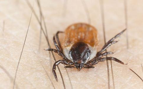 女童瘫痪原因成谜 蜱麻痹症状 蜱虫图片