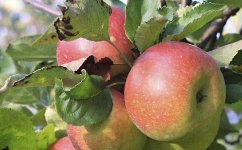 哪些水果不适合经期 经期适合吃什么水果 最适合经期的水果有哪些