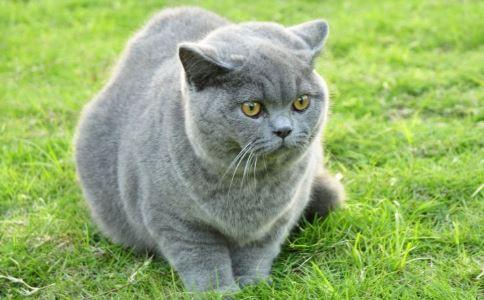猫咪中毒输狗血 误吃老鼠药有什么反应 人吃了老鼠药怎么解毒