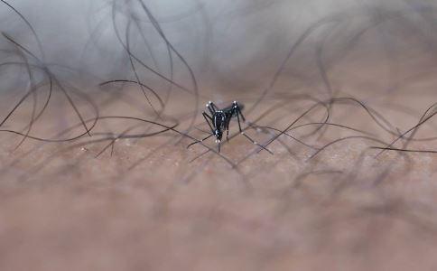 8元1只悬赏锥蝽 锥蝽图片 夏天如何防蚊虫