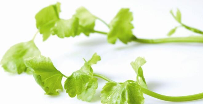 芹菜能降压吗 芹菜怎么吃能降压 怎么吃芹菜降血压效果好