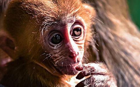 中国研究猕猴自闭症 孩子自闭有7个信号