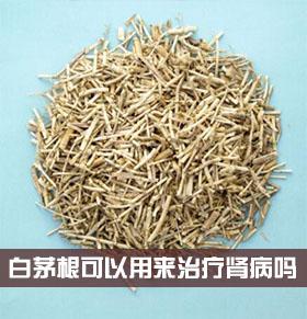 白茅根能治肾病吗 白茅根治疗肾病的方法 白茅根的功效作用