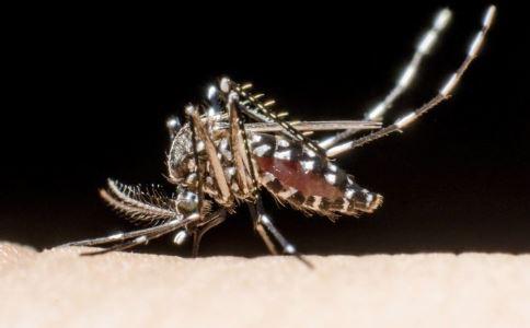 法国小城禁止蚊子入城 蚊子的危害 传播疾病的蚊子有哪些