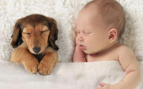被爱犬舔舐后截肢 宠物带来的疾病 如何预防宠物带来的疾病