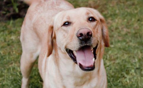被狗舔致四肢被切 败血症的危害 引起败血症的原因