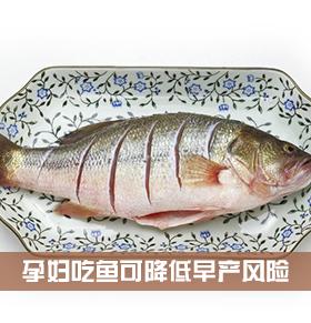 吃鱼可以降低早产风险 孕妇可以吃什么鱼