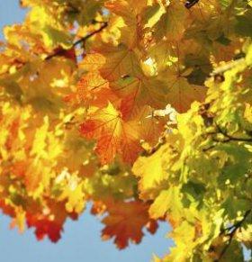 立秋后如何养生 立秋后饮食要注意哪些 立秋后需注意些什么
