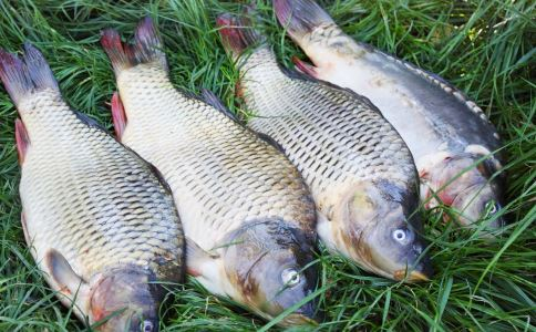 解剖鲫鱼保送清华 一条鲫鱼正在刷屏 鲫鱼是什么鱼