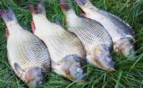 鲫鱼有哪些营养价值 哪些人不宜吃鲫鱼 吃鲫鱼要注意哪些