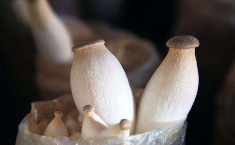 家门缝长巨型菇 如何分辨毒蘑菇 蘑菇的营养价值