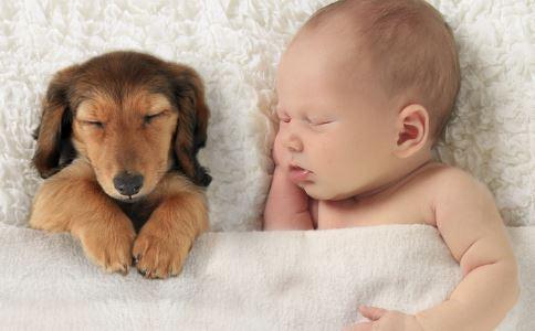中国人养宠物花了1708亿 如何养宠物才健康