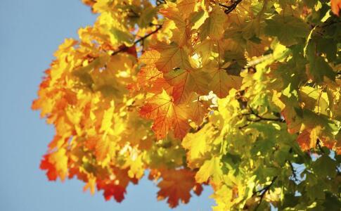 秋季为什么要养护脾胃 秋季养脾胃吃哪些食物好 秋季吃黄色食物有哪些好处