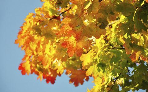 秋燥吃什么 去秋燥 如何去秋燥