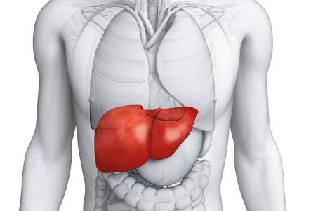 办公族如何养肝护肝 上班族怎么养护肝脏 养肝护肝吃什么