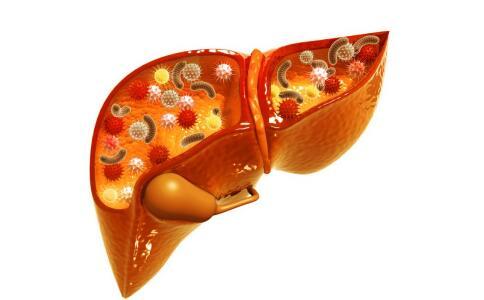 乙肝肝纤维化吃什么 乙肝肝纤维化吃什么食物 乙肝肝纤维化吃哪些食物