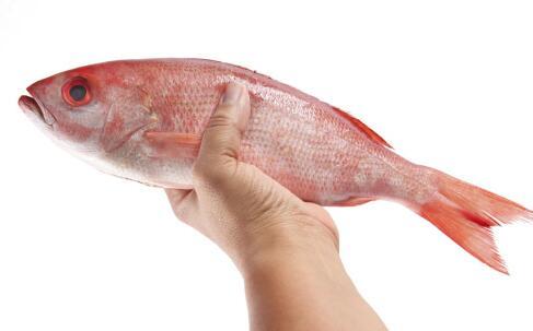 老人常吃鱼有哪些好处 哪些鱼老人不宜吃 适合老人的鱼有哪些