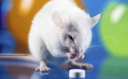 老鼠传染人类戊型肝炎 香港老鼠传染人类戊型肝炎 科研发现