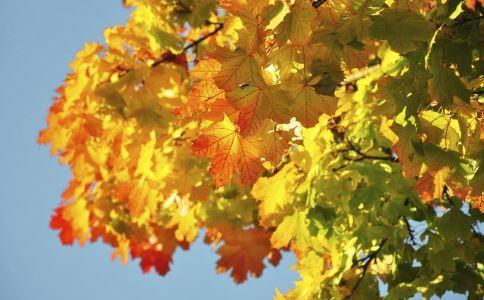如何预防秋季上呼吸道感染 北京大风降温来袭 秋季常见疾病预防知识