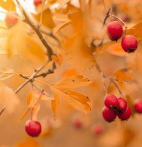 秋天排毒 秋天吃什么排毒 秋天排毒的方法