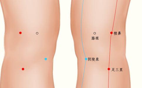人体小腿穴位 人体小腿穴位图 小腿穴位图