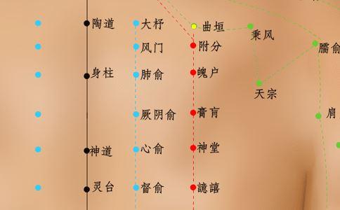 曲垣穴穴位图 曲垣穴穴位的准确位置图 曲垣穴的作用