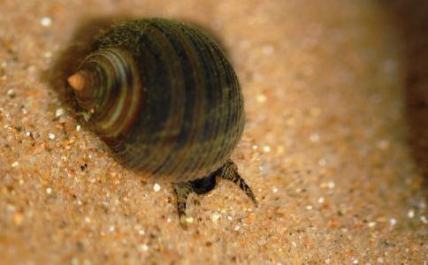 血蚶有什么功效 血蚶有哪些经典吃法 血蚶怎么做好吃