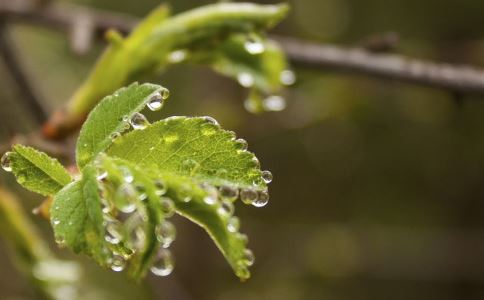 春分节气如何养生 春分过后如何养生 如何祛除湿热