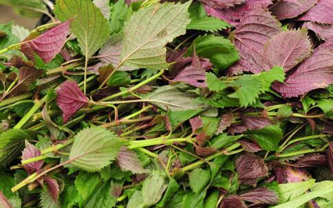 春季要如何预防疾病 春季防病吃什么好 春季养生吃哪些食物好