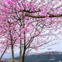 立春后如何养生 立春后吃什么 立春过后吃什么蔬菜好