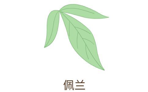 什么是芳香化湿药 芳香化湿药有哪些 芳香化湿药有什么效果