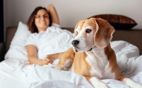 接触宠物或传病毒 宠物什么病能传染人 宠物有什么病可以传染给人